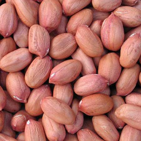 Nutsland l Premium Quality Egyptian Peanuts Producer